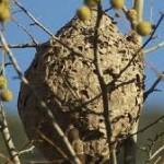 Kale  ekintza:  Apirilak  4,  osteguna