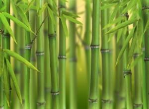bambu_0